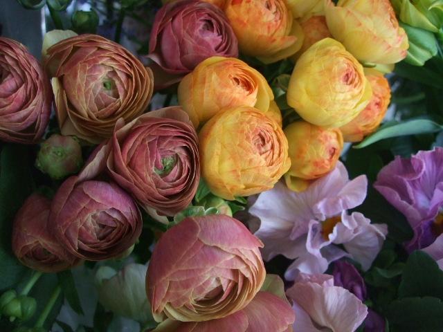 オークリーフ(白木蓮と黒いカラーの花)_f0049672_14432461.jpg