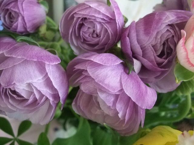 オークリーフ(白木蓮と黒いカラーの花)_f0049672_1443377.jpg