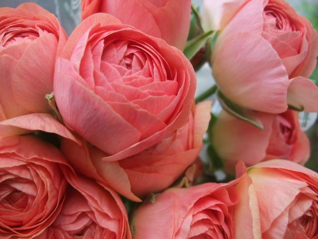 オークリーフ(白木蓮と黒いカラーの花)_f0049672_1443634.jpg