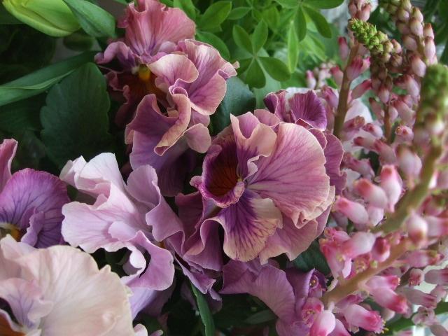 オークリーフ(白木蓮と黒いカラーの花)_f0049672_14484759.jpg