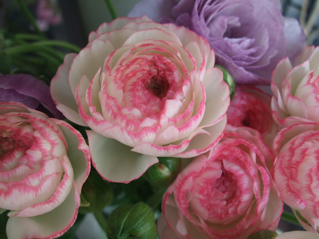 オークリーフ(白木蓮と黒いカラーの花)_f0049672_1448971.jpg