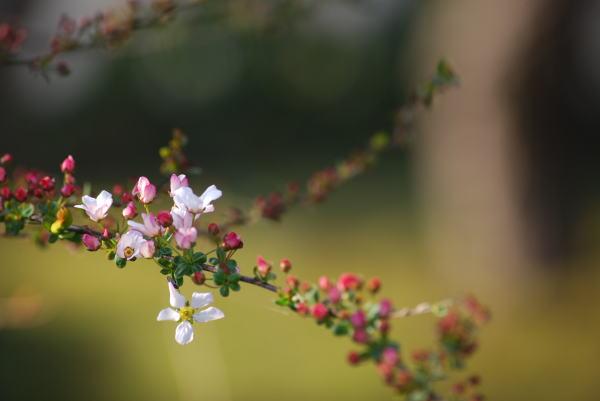 春なのに・・・_b0189573_18175095.jpg