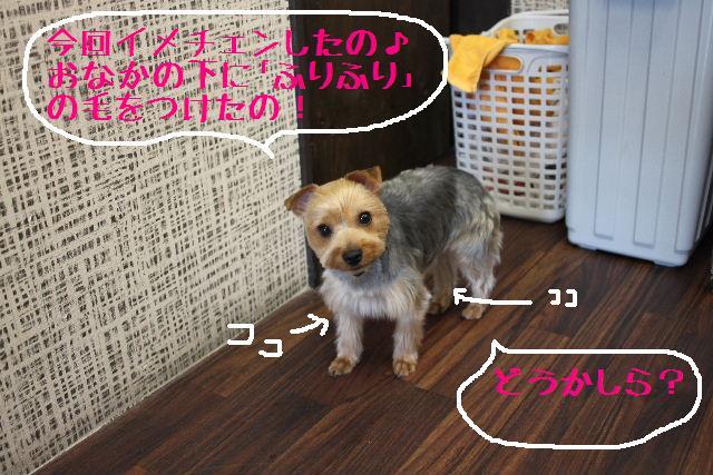 b0130018_925651.jpg