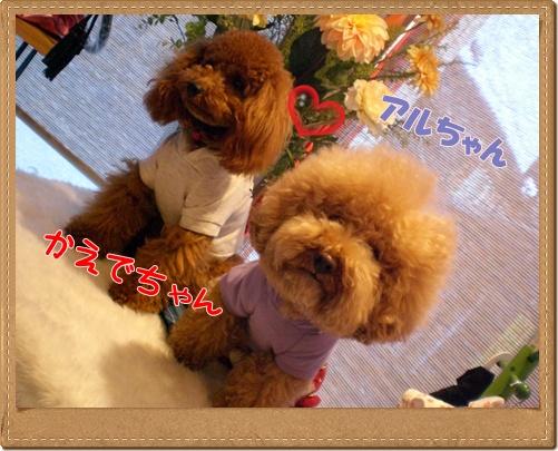 東京から_b0084929_1912829.jpg