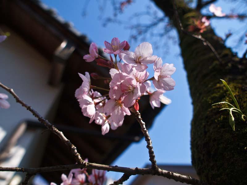 桜、週末は引っ越し_d0127876_21341938.jpg