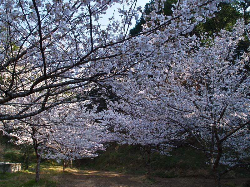 桜、週末は引っ越し_d0127876_21342560.jpg