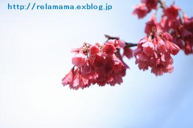 c0212987_1844209.jpg