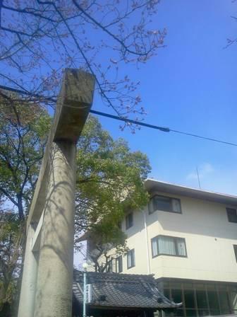 桜開花_b0164894_10344220.jpg