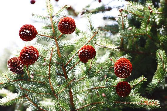 Spring Christmas_b0208495_22344675.jpg