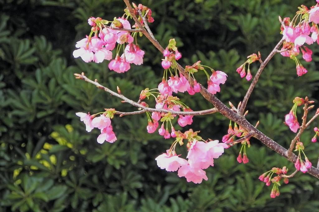blog上で花見を・・/太陽黒点_b0024798_16295876.jpg