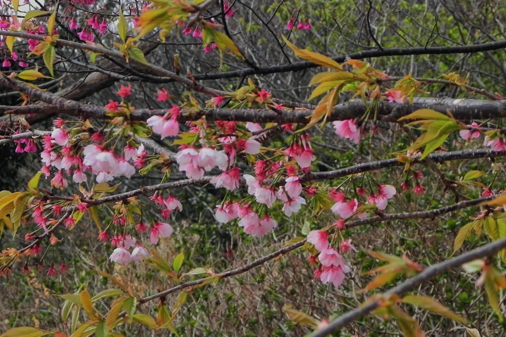 blog上で花見を・・/太陽黒点_b0024798_16301539.jpg