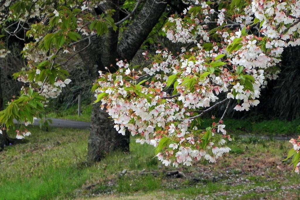 blog上で花見を・・/太陽黒点_b0024798_16303215.jpg