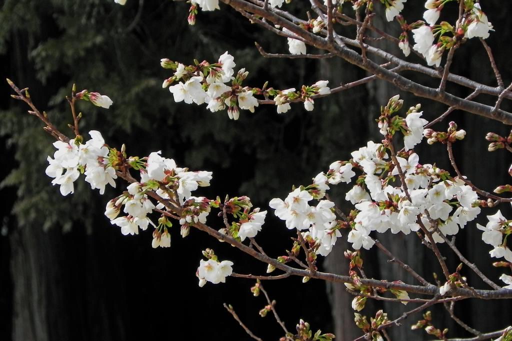blog上で花見を・・/太陽黒点_b0024798_1630564.jpg