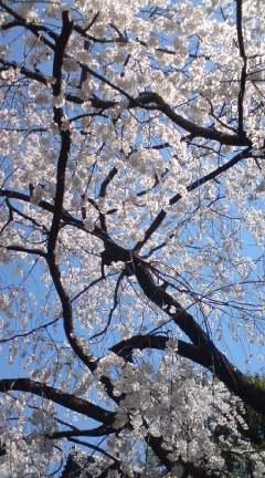 春の訪れ_e0005507_15445515.jpg