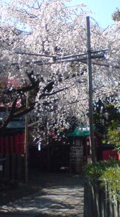 春の訪れ_e0005507_15445555.jpg