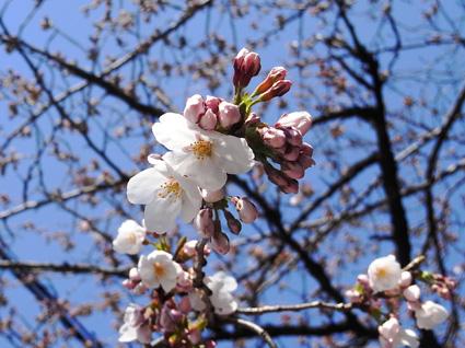 春到来!_a0148909_20174557.jpg