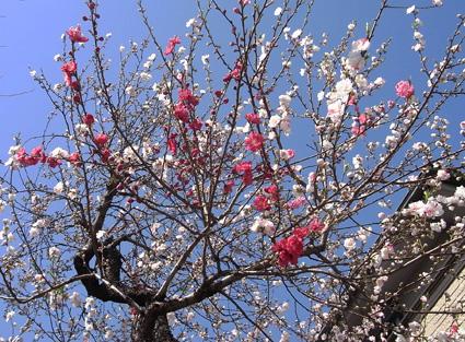 春到来!_a0148909_20195048.jpg