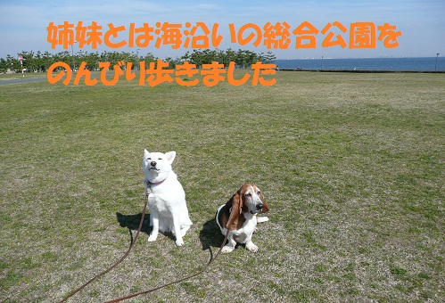 f0121712_23592036.jpg