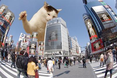 ヨウカンさん渋谷ジャック!_a0028451_2183831.jpg