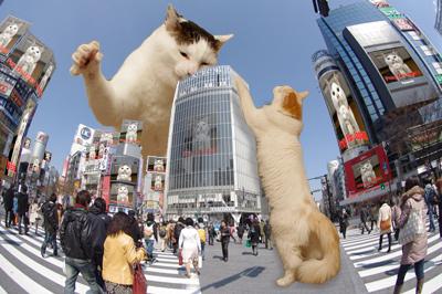 ヨウカンさん渋谷ジャック!_a0028451_8134242.jpg