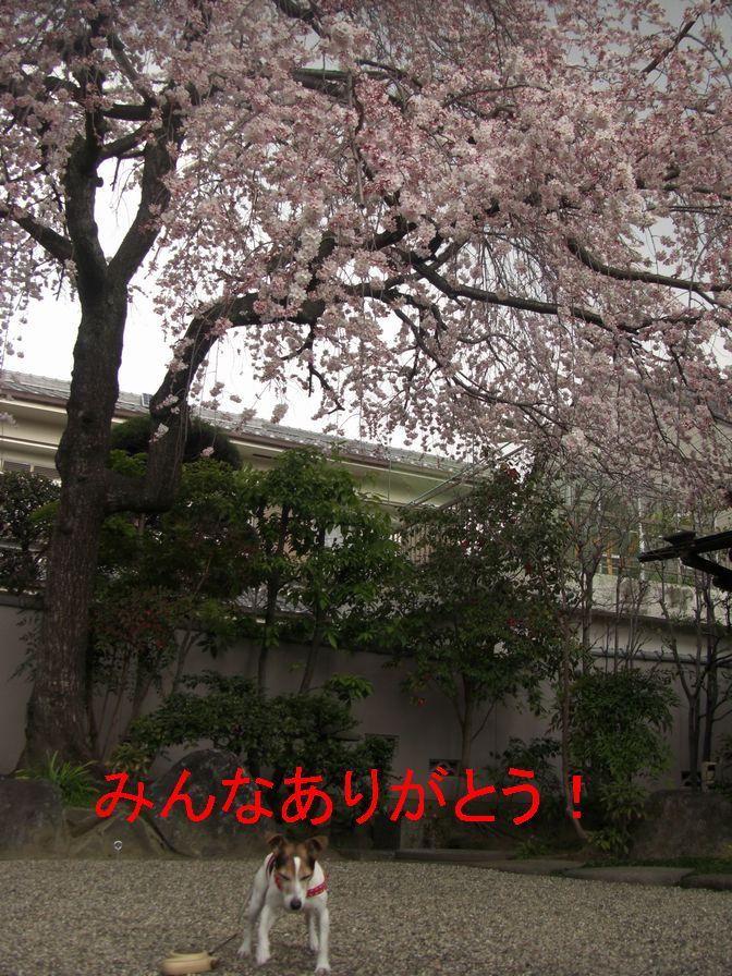 f0053952_13591676.jpg