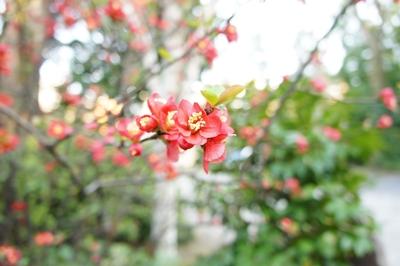 春は花 _a0133859_17264458.jpg