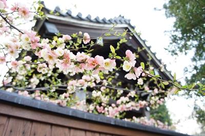春は花 _a0133859_17265167.jpg