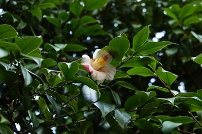 春は花 _a0133859_17265836.jpg