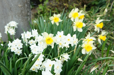 春は花 _a0133859_17271064.jpg