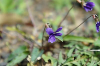 春は花 _a0133859_17271767.jpg