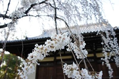 春は花 _a0133859_174447100.jpg