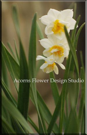 春のクラッチブーケ_f0215262_1752217.jpg