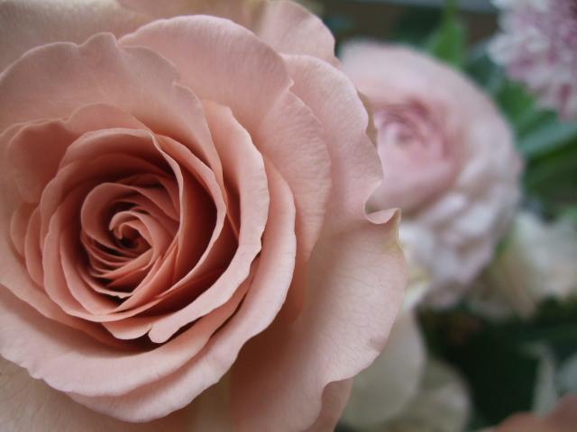 オークリーフ(シュナーベルと微妙なピンク色の花たち)_f0049672_17152691.jpg