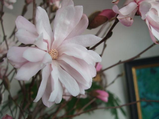 オークリーフ(淡いピンクのシデコブシのある風景)_f0049672_1820183.jpg