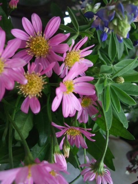 オークリーフ(淡いピンクのシデコブシのある風景)_f0049672_186268.jpg