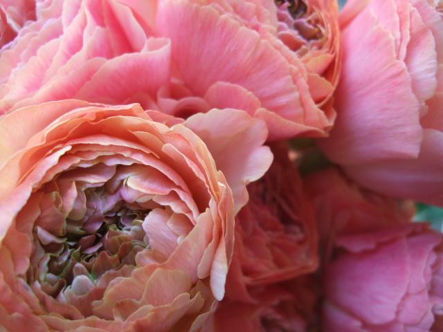 オークリーフ(淡いピンクのシデコブシのある風景)_f0049672_186957.jpg