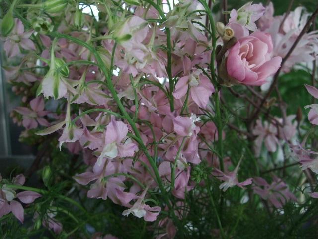 オークリーフ(淡いピンクのシデコブシのある風景)_f0049672_187743.jpg