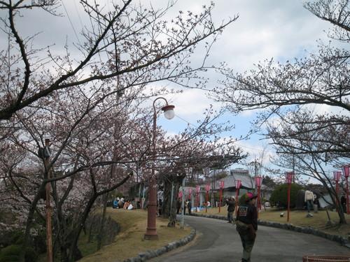 2011 お花見は!!_d0144077_247880.jpg