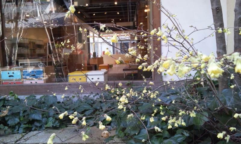 IREMONYAの庭に、_b0087378_18424836.jpg