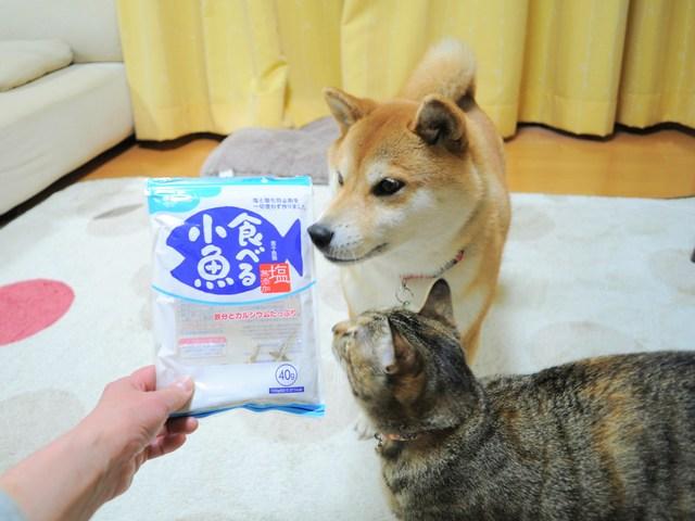 怒りの猫パンチ_a0126590_21403343.jpg