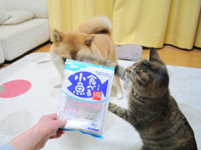 怒りの猫パンチ_a0126590_2144593.jpg