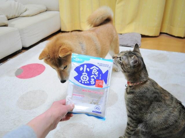 怒りの猫パンチ_a0126590_21461428.jpg