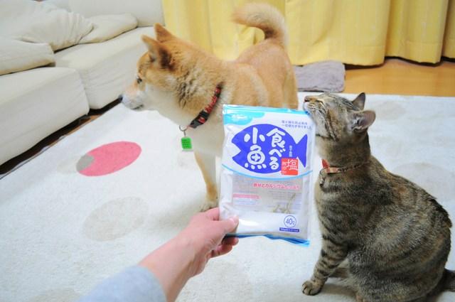 怒りの猫パンチ_a0126590_21475612.jpg