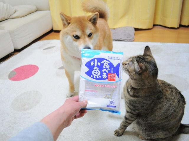 怒りの猫パンチ_a0126590_2149125.jpg
