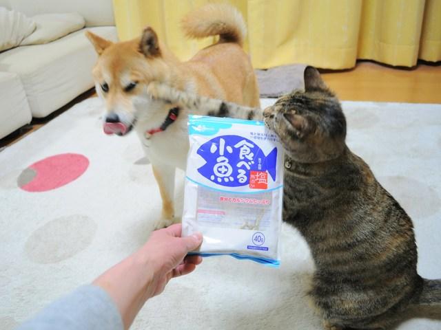 怒りの猫パンチ_a0126590_21494313.jpg