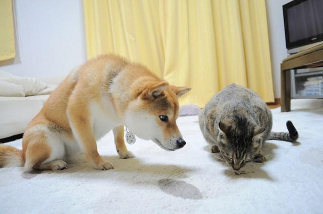 怒りの猫パンチ_a0126590_2152587.jpg