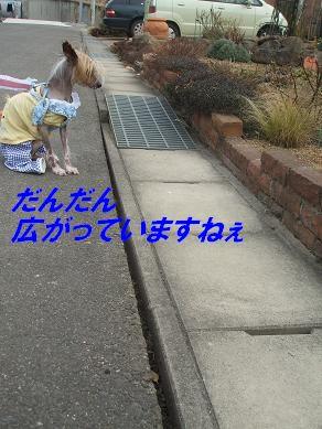 f0179203_9523828.jpg