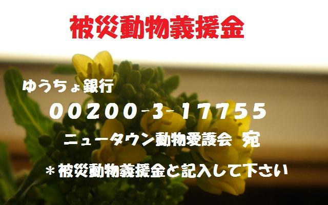 b0180709_21524058.jpg