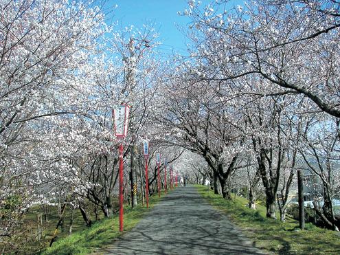 春_e0149215_18314479.jpg