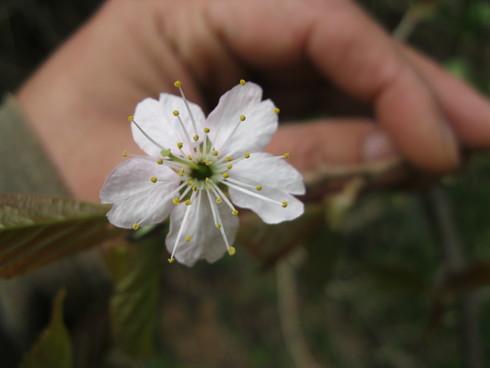 「春の 植えつけ」~~_a0125419_1415226.jpg